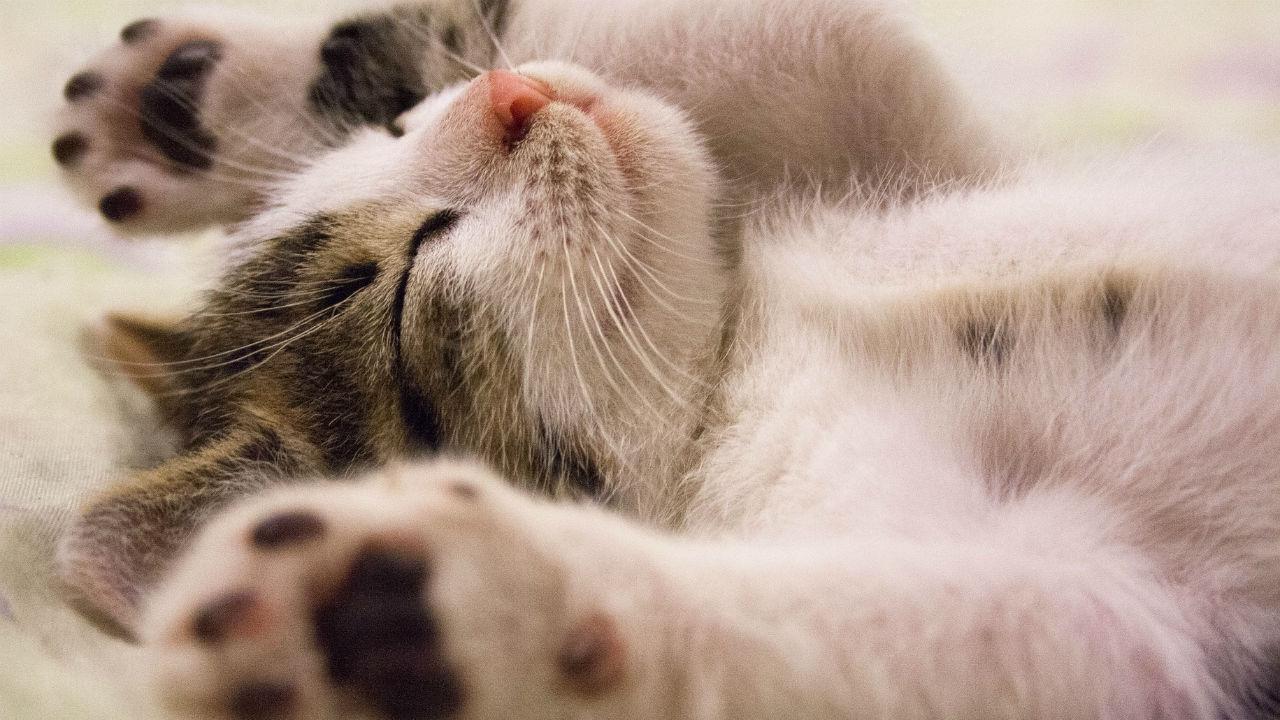 Beeztees: hét adres voor een gelukkig huisdier